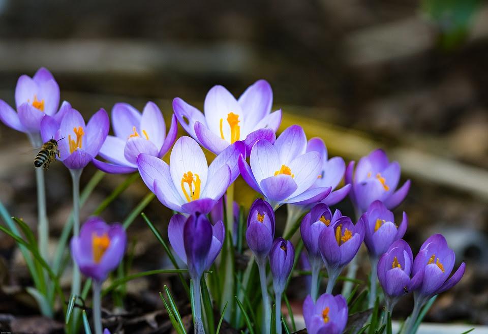 Alergias oculares aumentam na Primavera.